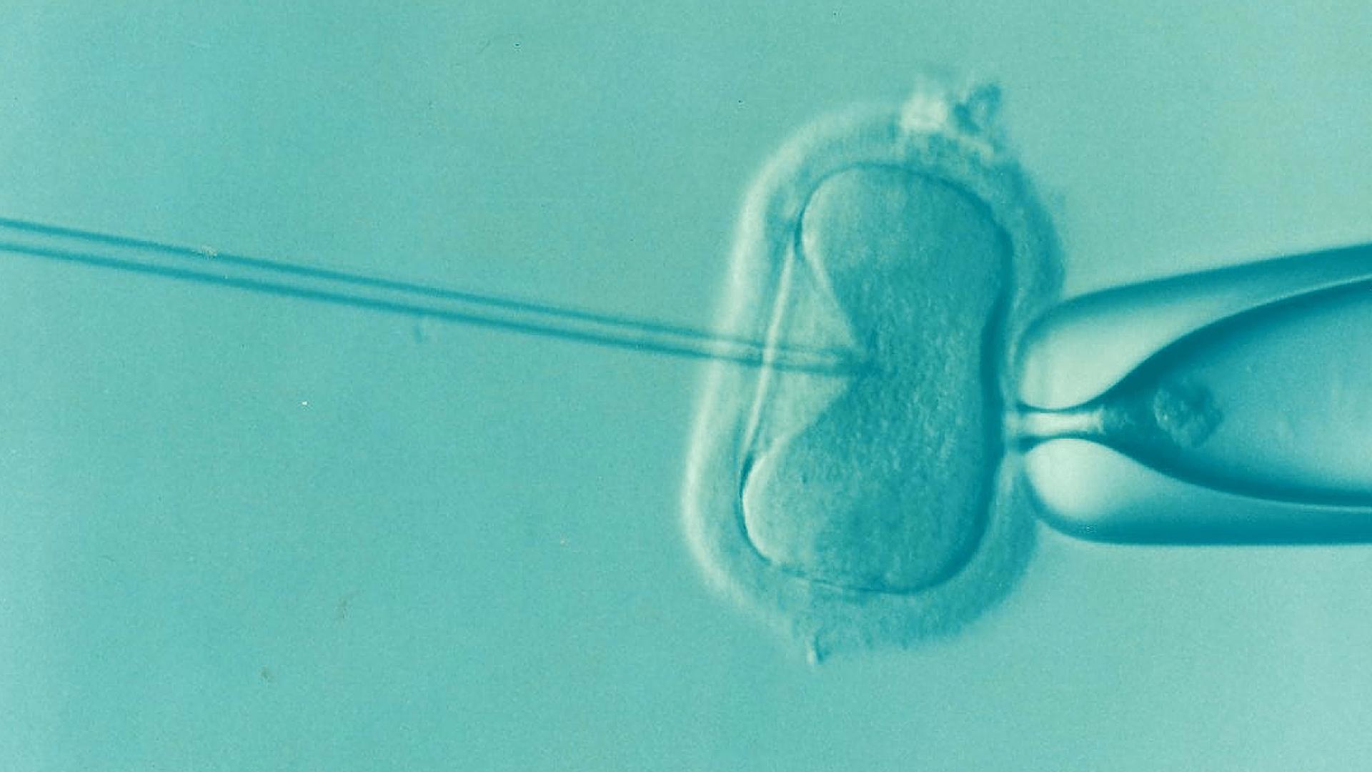 Tratamiento de infertilidad © Estar en armonía