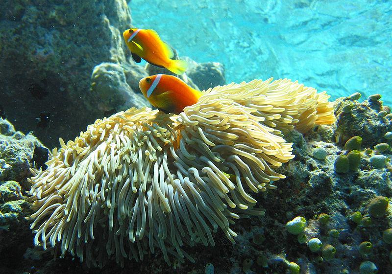 Fondo marino en Islas Maldivas © Wikipedia/Jan Derk