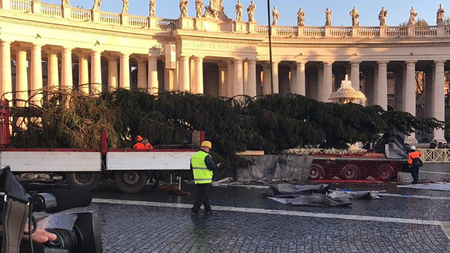 Colocación del abeto rojo de casi 21 metros en el Vaticano © Vatican Media