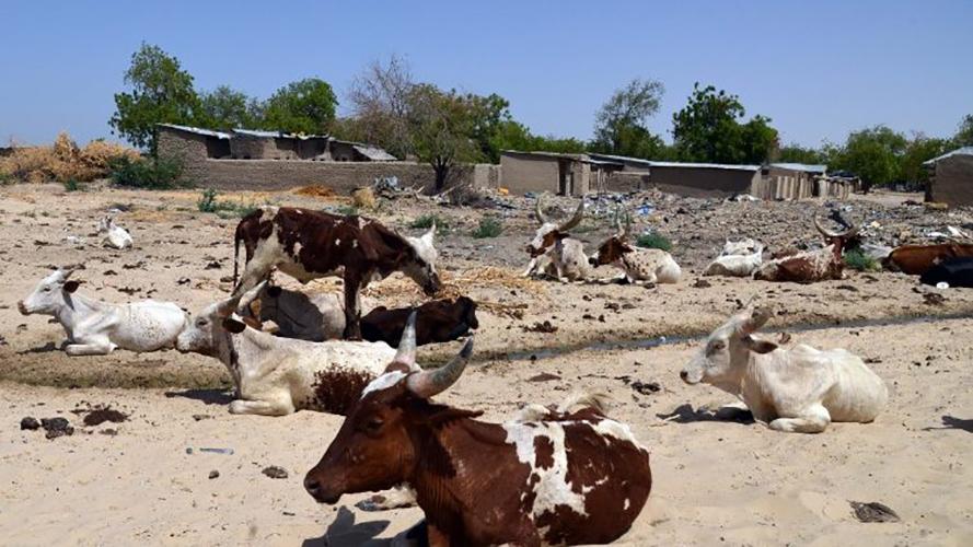 Sahel, África © Vatican News