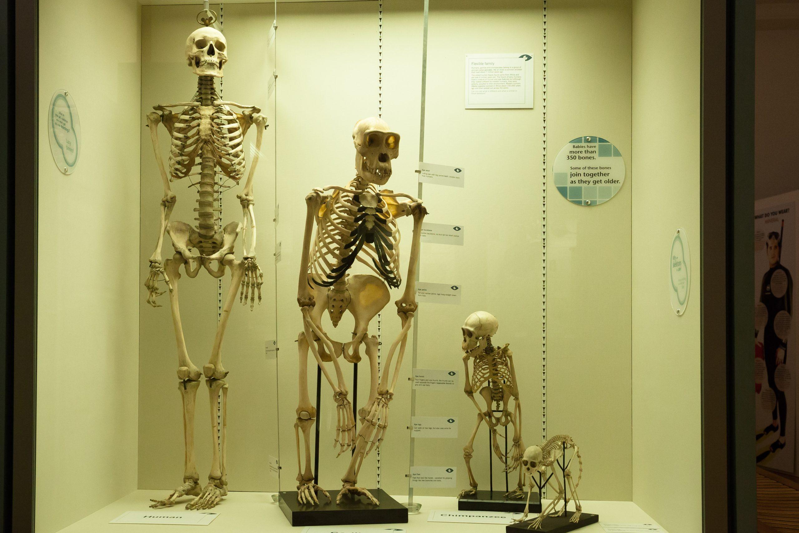 Bióérica genotipos evolución